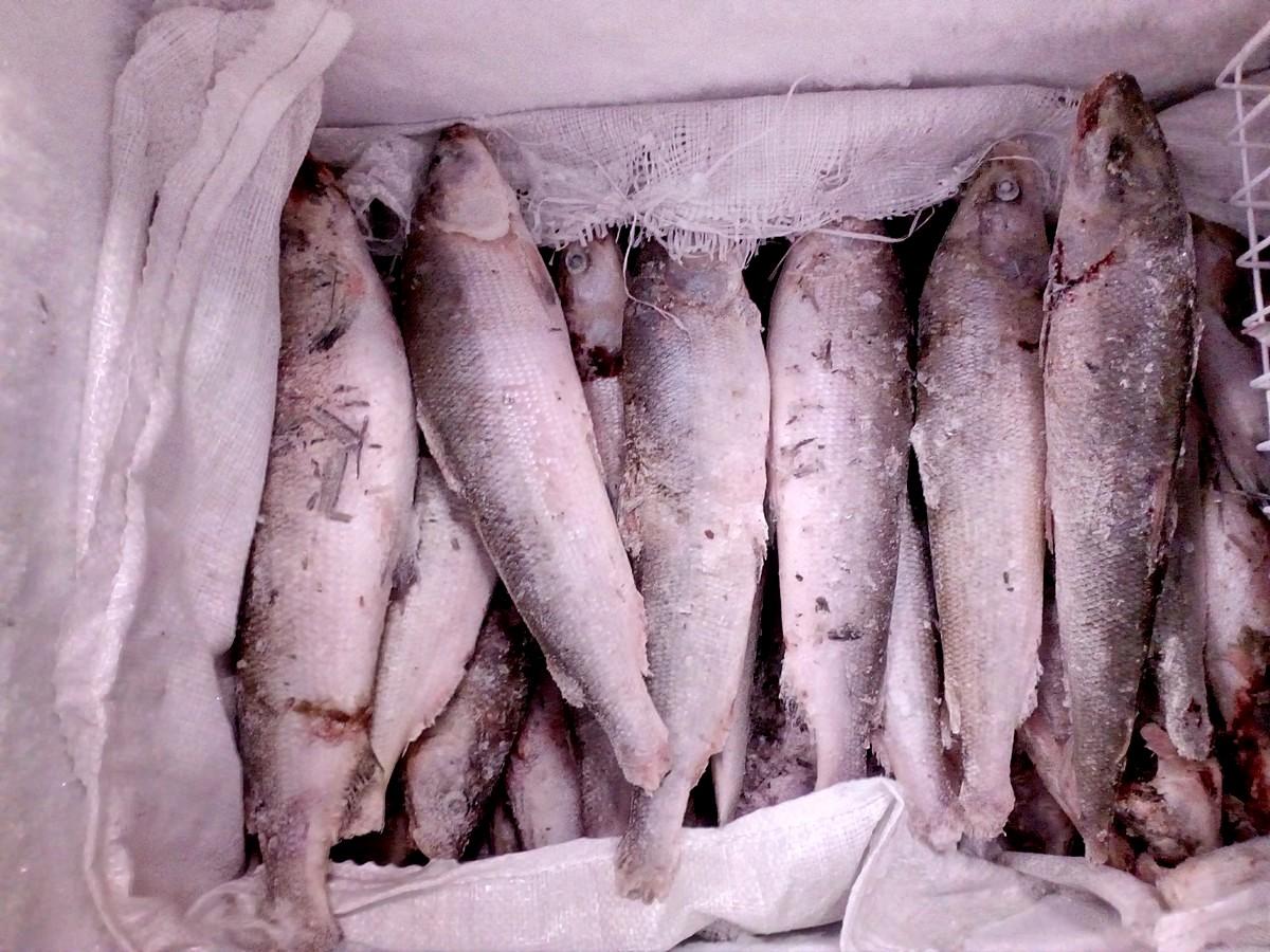Севастополь, рыба, мясо