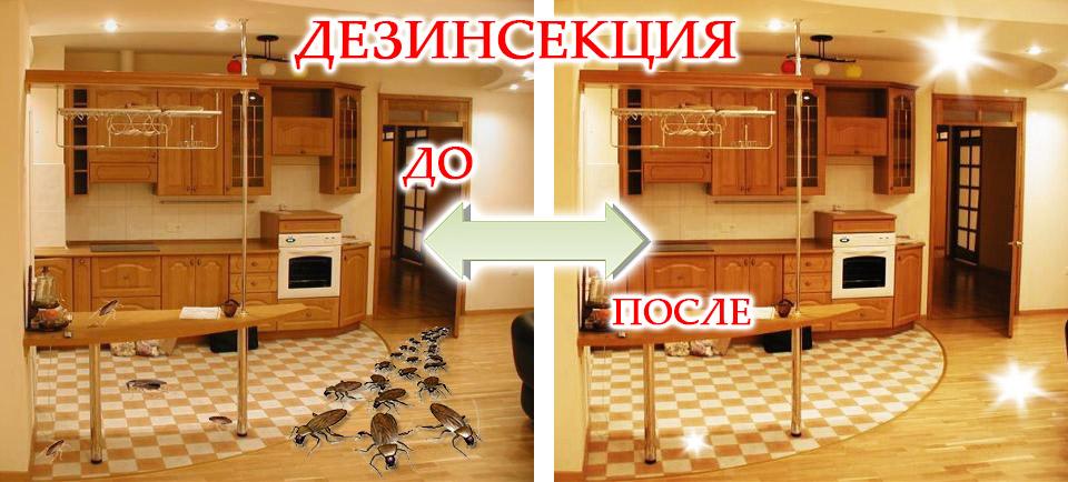 Дератизация, дезинсекция, дезинфекция, Севастополь, Крым