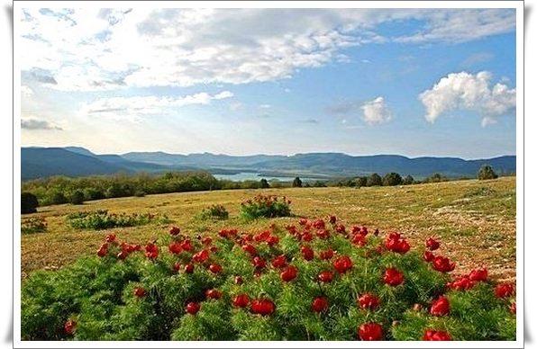 Байдарская долина Крым снять дом